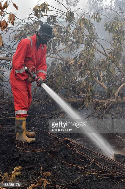 An Indonesian fireman puts out a fire on peatland in Rimbo Panjang Riau province on September 15 2015 Indonesia on September 14 declared a state of...