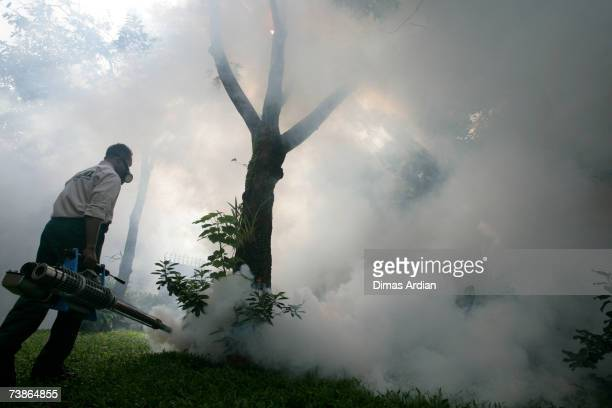 An Indonesian man fumigates a yard to expel Dengue Fever carrying mosquitoes during an outbreak of the tropical disease, on April 12, 2007 in Capital...