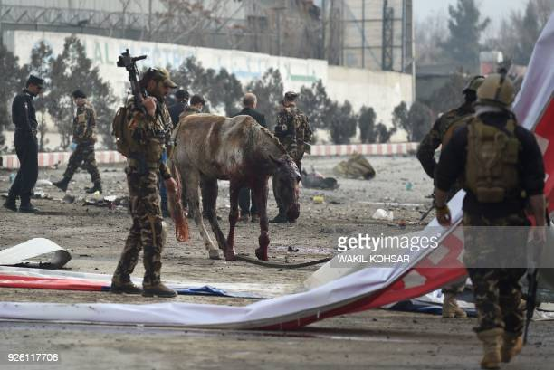 An injured horse walks amongst Afghan security personnel inspecting the site of car bomb attack targeting foreign forces in Kabul on March 2 2018 A...