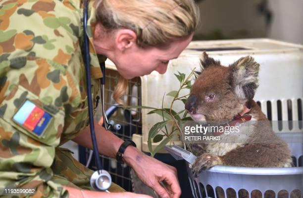 An injured Koala is being treated at a makeshift field hospital at the Kangaroo Island Wildlife Park on Kangaroo Island on January 14, 2020. -...
