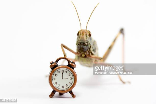 An insect grasshopper can not sleep sick from insomnia