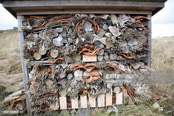 An insect hotel for wasps and bees Ecomare Texel Netherlands