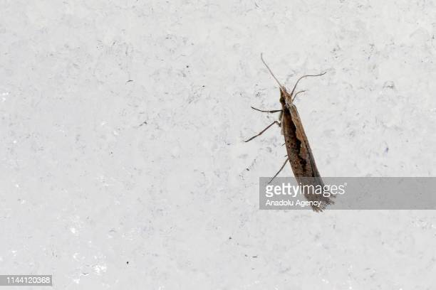 An insect is seen on snow in Bahcesaray district of Van Turkey on May 16 2019