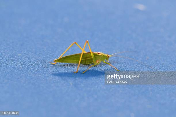 An insect stands on the court as Ryan Harrison of the US plays Croatia's Marin Cilic during their men's singles third round match on day five of the...