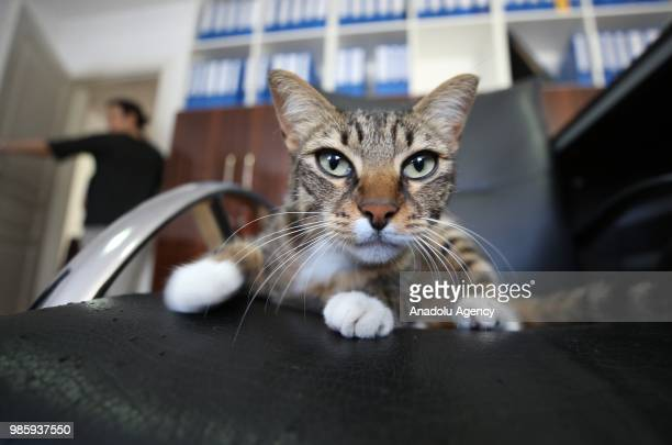 An inside view of an office at Esenkoy Town Municipality as a cat looks on lying on the chair at Cinarcik district of Yalova province in Turkey on...