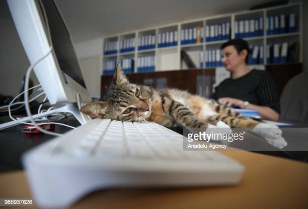 An inside view of an office at Esenkoy Town Municipality as a cat stands on the desk in front of a computer at Cinarcik district of Yalova province...