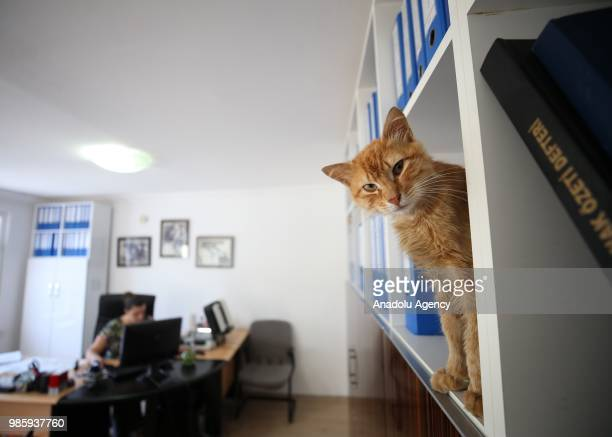 An inside view of an office at Esenkoy Town Municipality as a cat looks on standing in the shelf between files at Cinarcik district of Yalova...