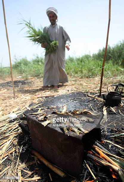 An Iraqi fisherman grills fish on an open fire along the shores of the alHuwaiza marshes northern Amara 420 km south of Baghdad on June 13 considered...
