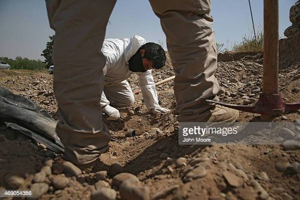 An Iraqi forensics team unearths bodies from a mass grave in the palace compound of former President Saddam Hussein on April 9 2015 in Tikrit Iraq...