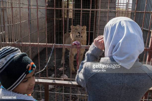 MOSUL IRAQ FEBRUARY 2 An Iraqi girl and her younger brother visit the last lion alive in Muntazr al Noor Zoo in Mosul Iraq on February 2 2017 The...