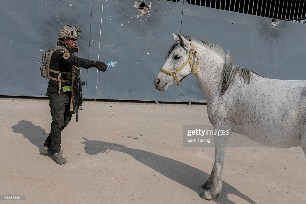 An Iraqi Golden Division soldier tries to give water to an injured horse that was found standing by the roadside on October 27, 2016 in Bartella, Iraq. Bartella was recently captured from ISIS by Iraqi Special Forces as they press toward Mosul, which is just some seven miles away from the town.