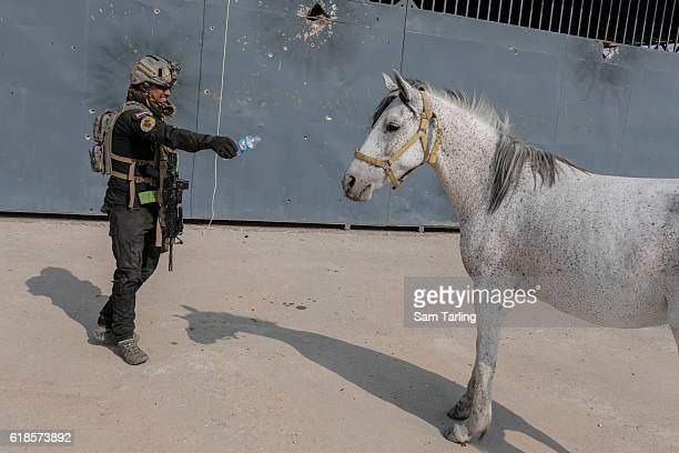 An Iraqi Golden Division soldier tries to give water to an injured horse that was found standing by the roadside on October 27, 2016 in Bartella,...