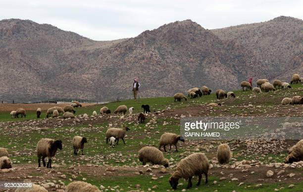 An Iraqi Kurdish shepherd looks after his herd of sheep in the northern Iraqi city of Dohuk on February 22 2018 / AFP PHOTO / SAFIN HAMED