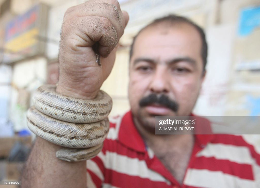 An Iraqi man shows a snake for sale at the al-Ghazel animal market in Baghdad, on May 21, 2010. The site is popular on with Iraqis on Friday, the weekend in Iraq.