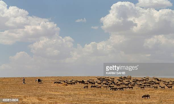 An Iraqi shepherd looks after his sheeps in alHamdaniyah 76 kms west of the Kurdish autonomous region's capital Arbil on June 18 as Iraqis fleeing...