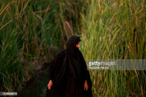 An Iraqi woman looks around as she harvests rice in the marshes of the southern district of Chibayish in Dhi Qar province, on September 22, 2020.