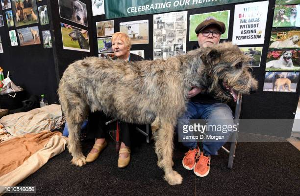 An Irish Wolfhound with its owners during the 2018 Sydney Dog Lovers Show on August 4 2018 in Sydney Australia The show is hosting the first ever...