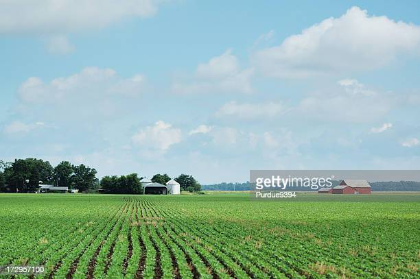 an isolated indiana soybean field and farm - indiana stock pictures, royalty-free photos & images