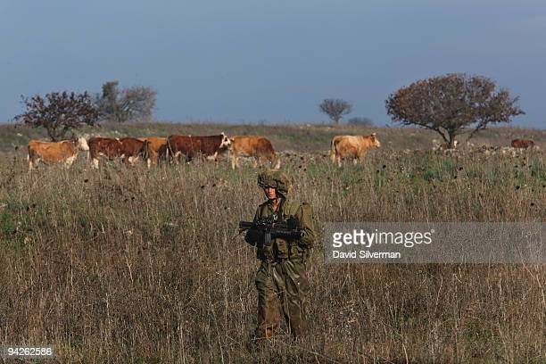 An Israeli army paratrooper advances past a herd of cattle during a livefire training exercise December 10 2009 on the Golan Heights The Israeli...
