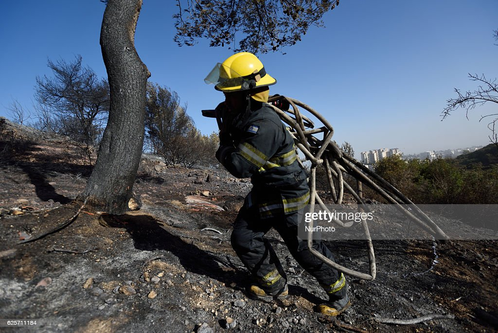 An ISraeli firefighter carries water pipes in a burnt forest hit by a massive forest fire in The Northern city of Haifa, Israel on November 25, 2016. The massive fire in the city of Haifa lead to the evacuation of dozens of thousands of city residents and is part of a lrage wave of forest fires errupted all over Israel during the last days.