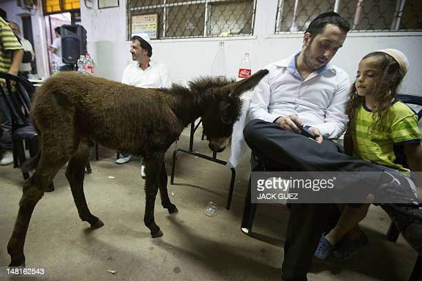 An Israeli Jewish man and a child sit alongside a ritual baby donkeys during the Redemption of the First Born Donkey or in Hebrew Pidyon Peter Chamor...