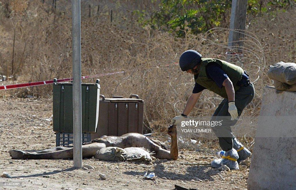 An Israeli police sapper takes finger pr : News Photo