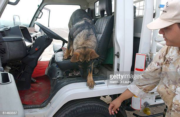An Italian Army explosives detection German Shepard, Nikor, searches a truck at the gate of the Italian base Camp Mittica on October 11, 2004 in...