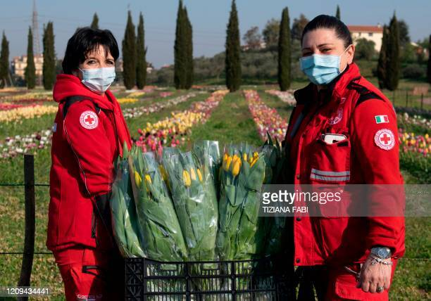 An Italian Red Cross volunteer wearing a sanitary mask to protect against the novel coronavirus COVID19 picks tulips in Roma Flowers Park on the...