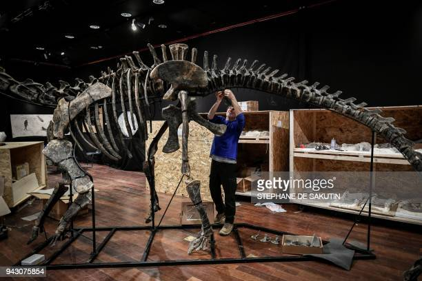 An Italian scientific consultant assembles the bones of a Diplodocus on April 7 before being auctioned on April 11 with an other Jurassic age...