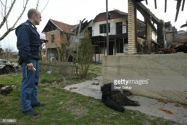 An Italian UNMIK police officer walks by a dead dog and the remains of houses March 20 2004 in what was the Serbian portion of the ethnically mixed...
