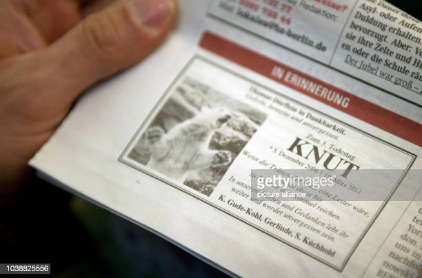 ILLUSTRATION An man holds up the 'BZ' newspaper with an obituary for polar bear Knut in Berlin Germany 19 March 2014 The polar bear died on 19 March...