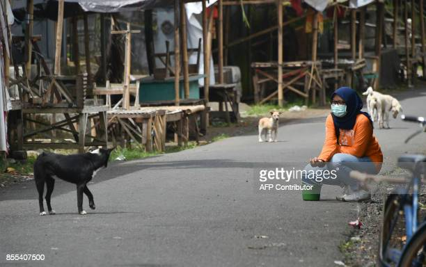 An NGO member feeds dogs left behind in a village where many villagers left for shelters due to Mount Agung volcanic activities in Karangasem on Bali...