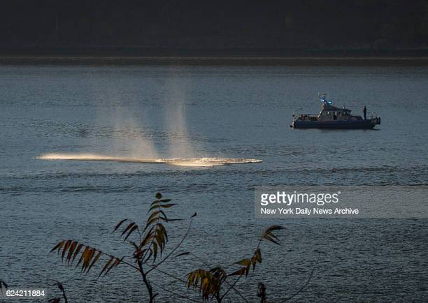 An NYPD Harbor Unit boat follows what seems to be a whale following a school of fish heading south on the Hudson River near the George Washington...