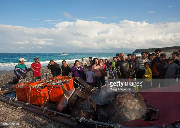 """An Ocean Sunfish """"mambo fish"""" being loaded for delivery to the market. The meat of the sunfish is a delicacy in East Asia, with Taiwan and Japan..."""