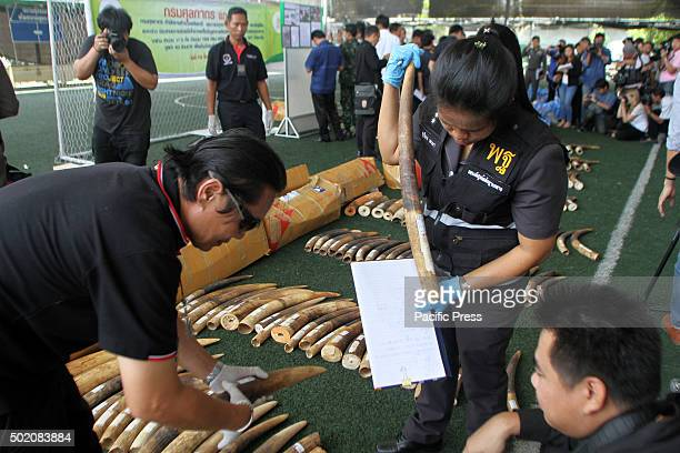 An official checks for fingerprints and DNA on the 789kg of smuggled elephant tusks the Customs Department on Friday announced had been seizure on...