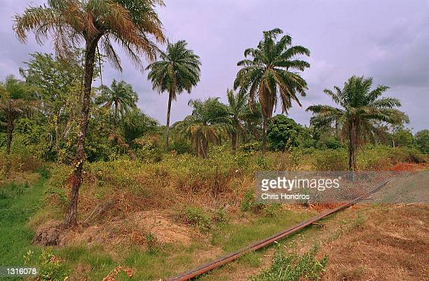 An oil pipeline runs through a Nigerian forest March 2001 in the Delta region of Nigeria The country is the world''s sixth leading oil producer and a...