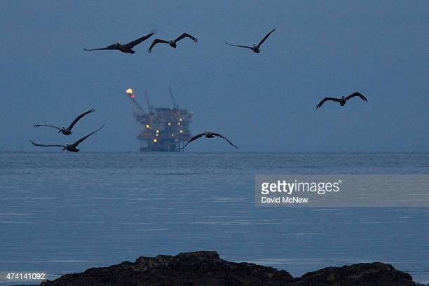An oil platform sits in the distance as California brown pelicans fly over oilcontaminated water from an inland oil spill before dawn at Refugio...