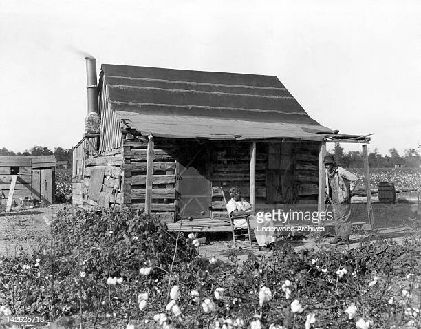 An old African American man and his wife at their cabin surrounded by cotton fields 1890s They were formerly slaves