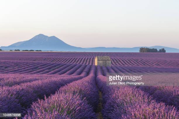 an old barn amongst the lavender fields on the plateau de valensole, provence, france. - provence alpes cote d'azur stock pictures, royalty-free photos & images