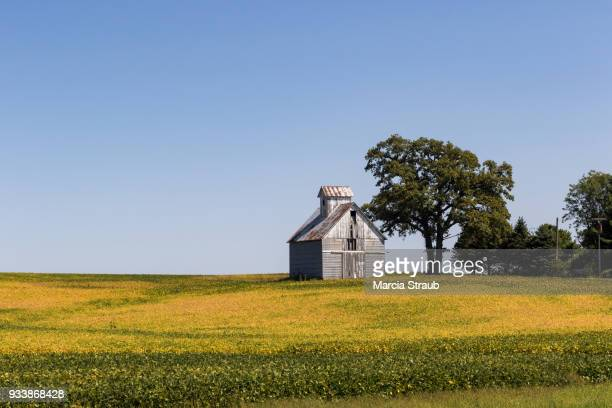 an old barn and a yellow soy bean field - illinois stock pictures, royalty-free photos & images