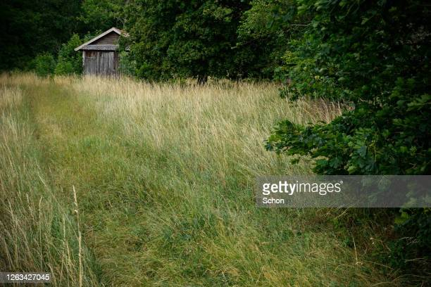 an old barn in the woods by a pasture in the summer in daylight - エーランド ストックフォトと画像