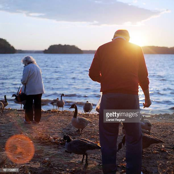 An old couple feeding birds by the lake, on a nice warm summer day. Showing the beautiful and fun lifestyle of retirees, and retired people all...