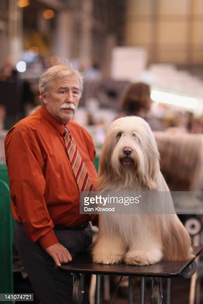 An Old English Sheepdog sits on a grooming table next to it's owner on day three of Crufts at the Birmingham NEC Arena on March 10, 2012 in...