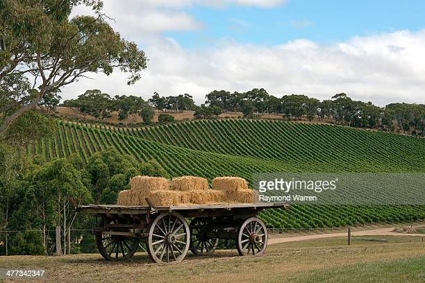 An old hay wagon on a hill flanked by a vineyard on a sunny day in Australia.