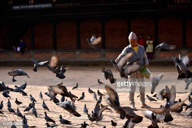 An old man offering grains towards pigeon at Bhaktapur Durbar Square Bhaktapur Nepal on Tuesday October 22 2019