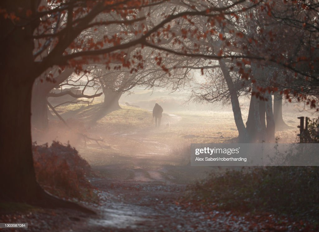 An old man walks his dog one winter's morning in a misty Richmond Park, Richmond, Greater London, England, United Kingdom, Europe : Stock Photo