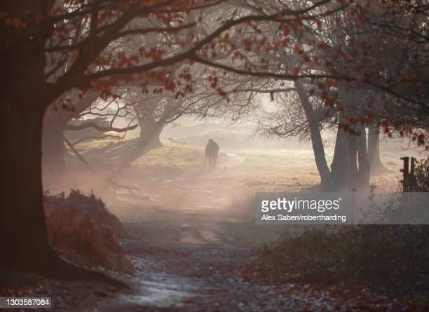 an old man walks his dog one winter's morning in a misty richmond park, richmond, greater london, england, united kingdom, europe - alex saberi stock pictures, royalty-free photos & images