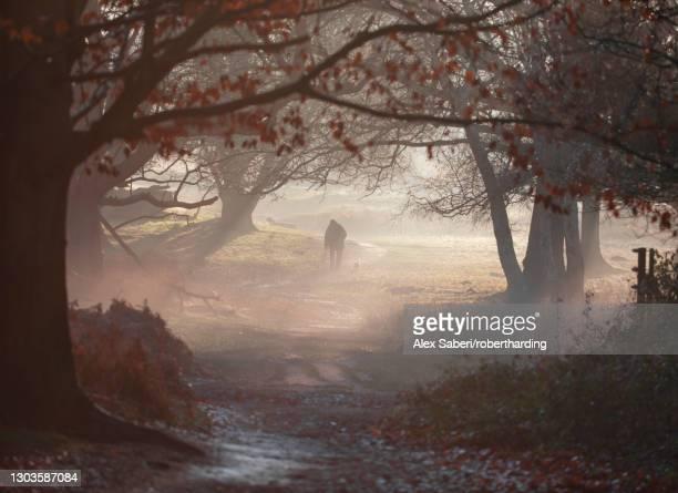 an old man walks his dog one winter's morning in a misty richmond park, richmond, greater london, england, united kingdom, europe - alex saberi stockfoto's en -beelden