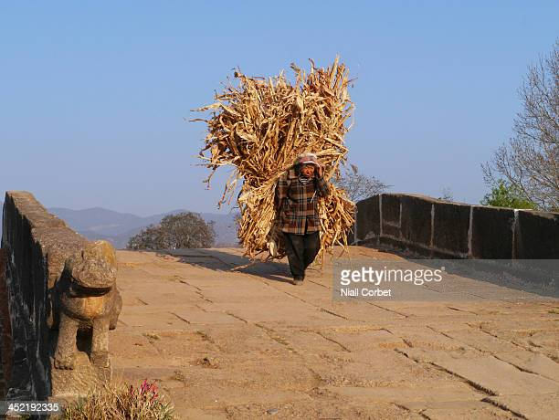 An old peasant lady carrying a huge load of maize stalks across Yujin Bridge in Shaxi, Yunnan Province, China. Shaxi is an old town on the ancient...