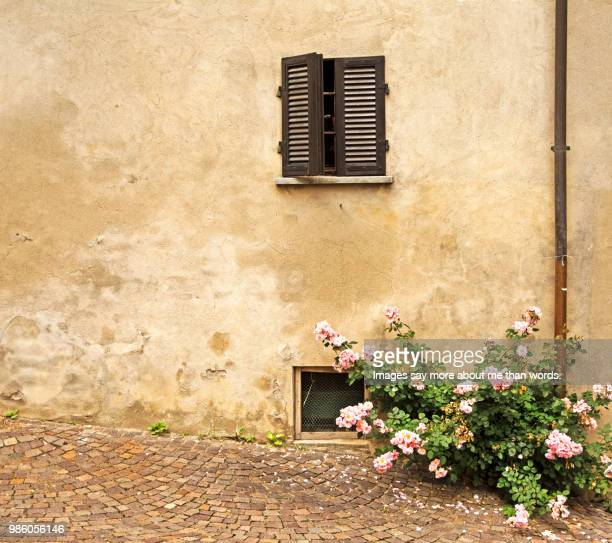 an old wall, an old window and a bloomig bush of roses. barolo, italy. - cream colored stock pictures, royalty-free photos & images